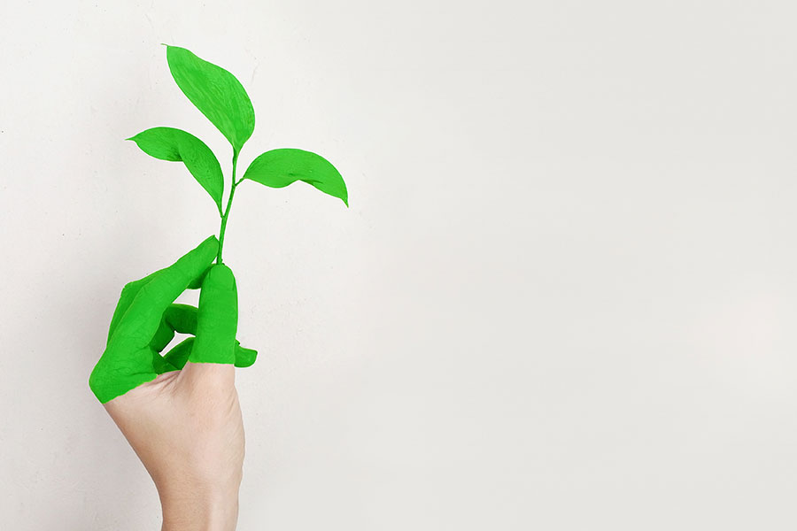 How Sonae Arauco Follows the 3 Principles of Sustainability