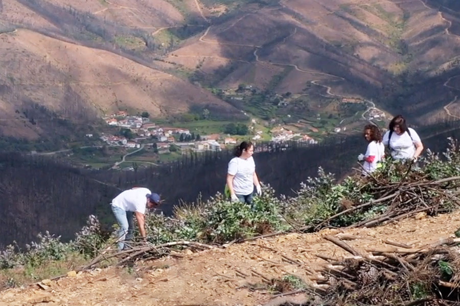 Sonae Arauco Cleans Up After Forest Fires