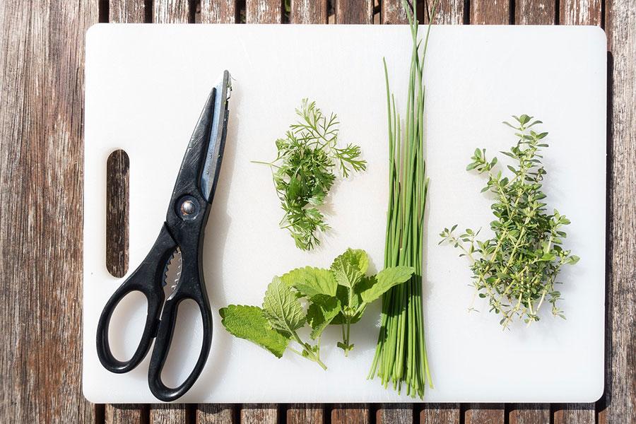 Herbs in your Kitchen: Your checklist
