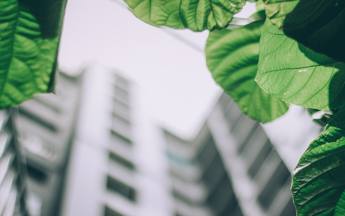 Green building standards: five tips to help you meet the requirements