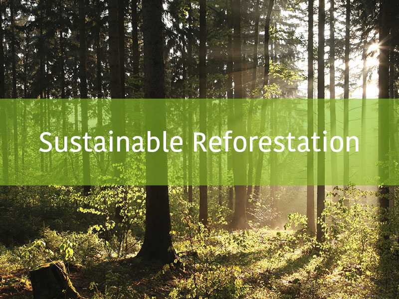 Sustainable reforestation – how it works