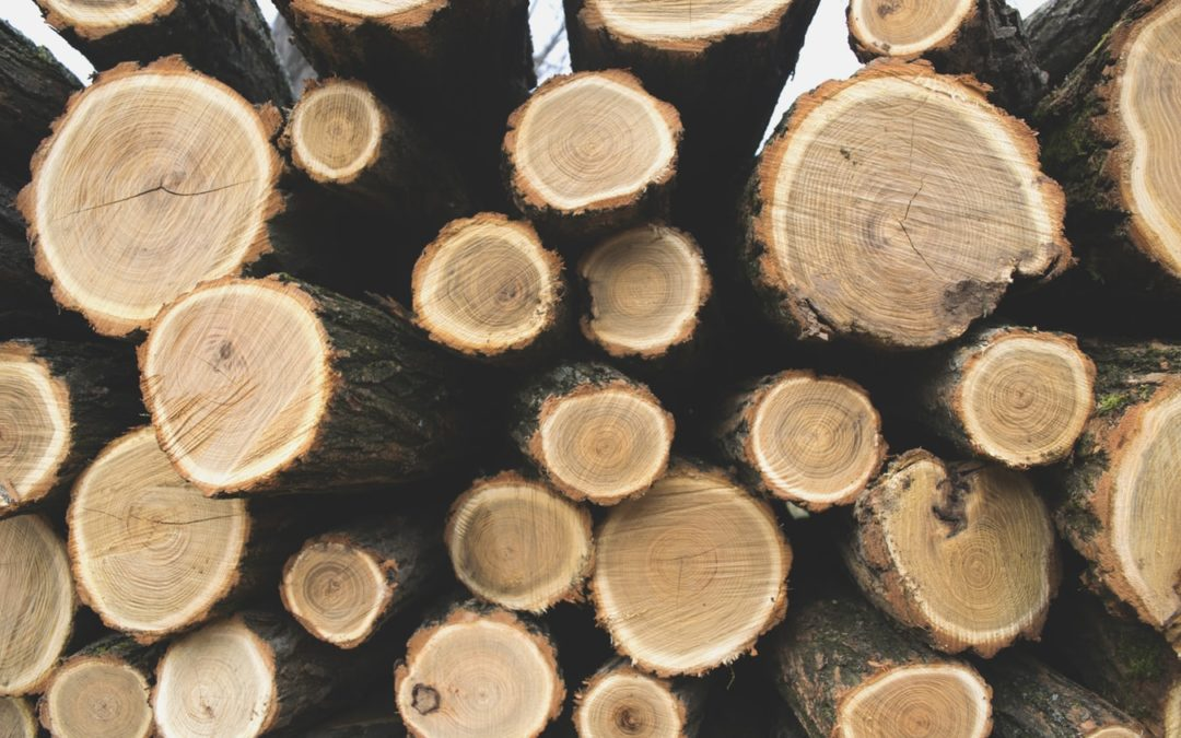 Sonae Arauco: about our timber
